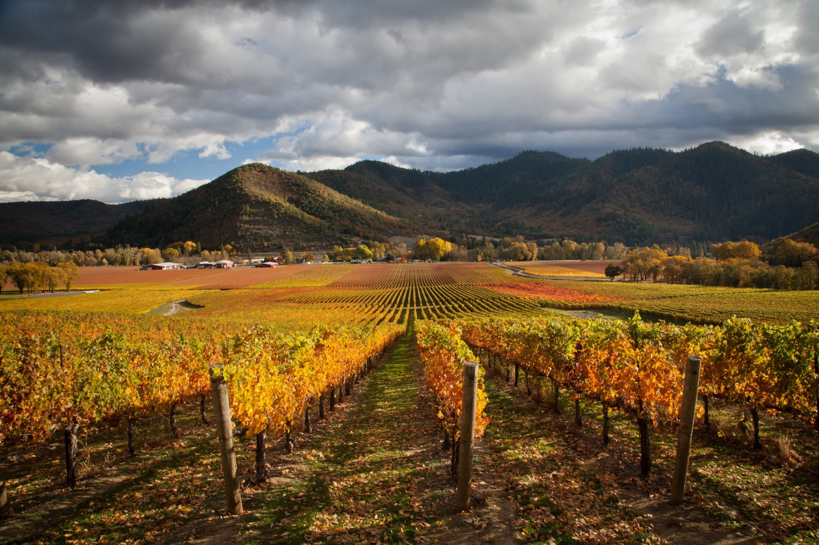 Rogue Valley Vintners